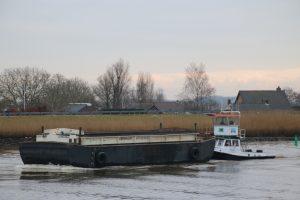 Zeehond op de Hollandsche IJssel